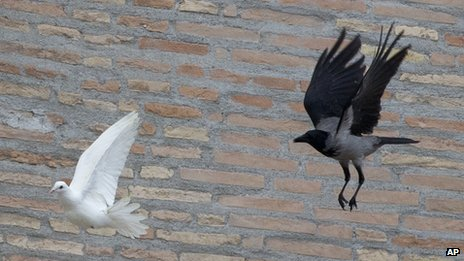 A crow who pretends to be a dove